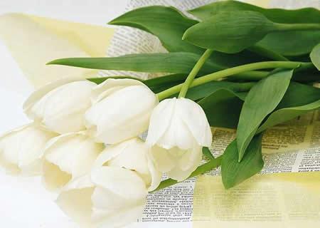 用香水舒缓心情 清凉香氛的减压新主张