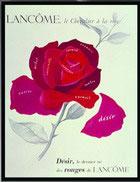 浪漫的法国玫瑰